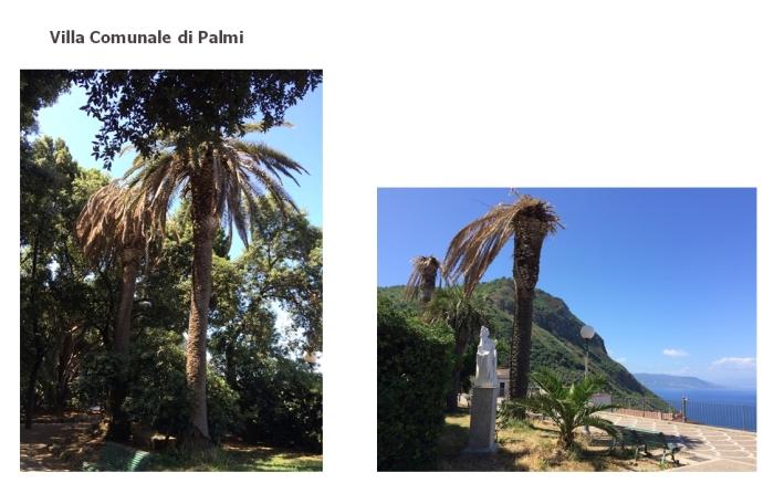 palmi2016-2